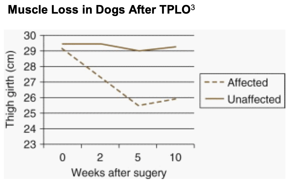 MYOS: Positive Results of Canine Muscle Recovery Study Should Benefit Uptake, Inform Human Development Programs